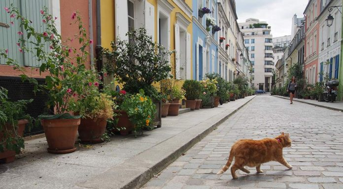 Rue Cremieux is one of the prettiest streets in Paris, thanks to its pastel-colored townhouses and cobblestones.