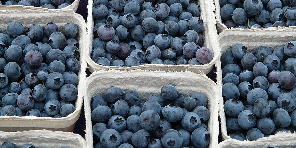 Blueberries in boxes
