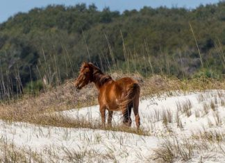 Winter camping is possible on Cumberland Island, GA