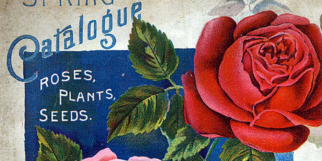 Seed Catalogs: 15 of the Best for Annuals, Vegetables and Perennials