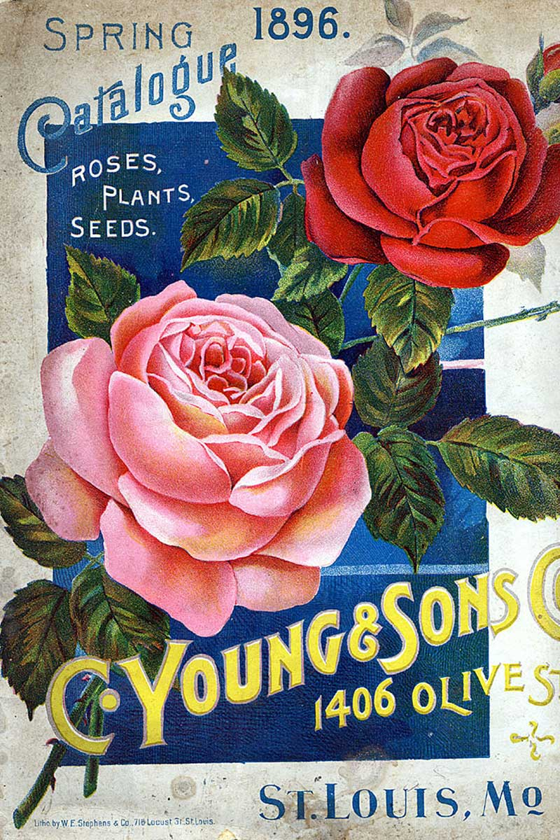 Seed Catalogs 15 of the Best for Annuals Vegetables and