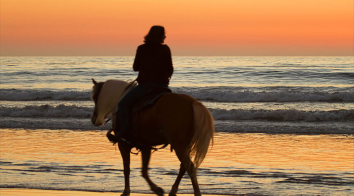 A beach horse ride tour is the best at sunset