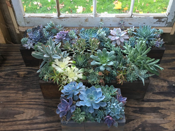 Rustic Succulent Centerpiece By The Mitered Joint On Etsy