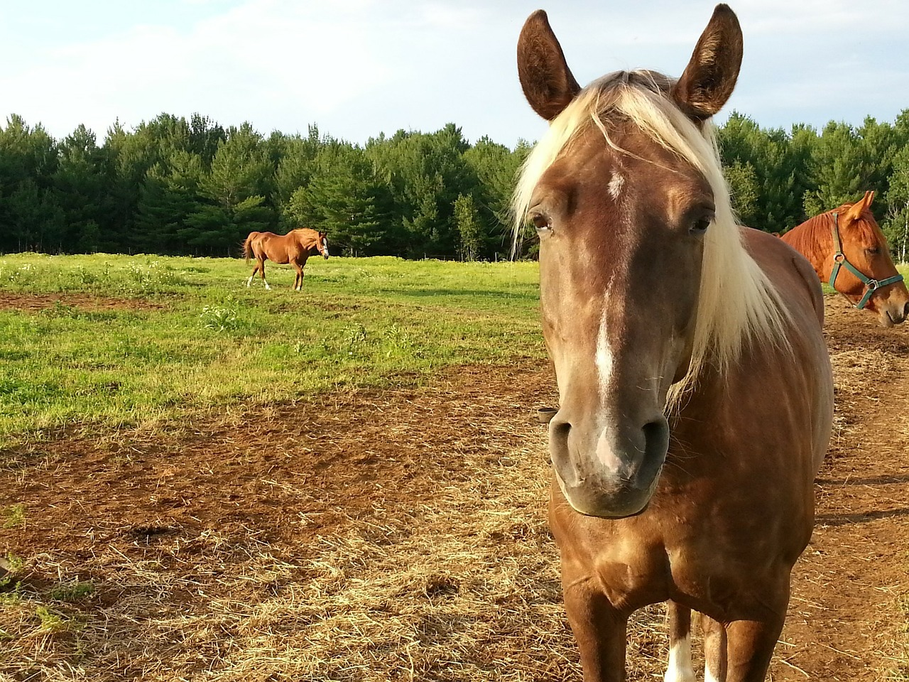 Horseback riding vacations are thrilling